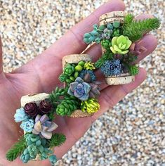 THREE TO AN ORDER! These adorable micro gardens, made using repurposed wine corks, baby succulents, and live moss, make for Succulent Wedding Centerpieces, Succulent Favors, Succulent Care, Succulent Arrangements, Succulent Terrarium, Succulent Ideas, Baby Succulents, Planting Succulents, Plantas Indoor