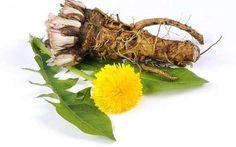 В 100 раз эффективнее химиотерапии: трава, которая убивает раковые клетки в течение 48 часов! - Корисні поради на всі випадки життя