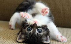 upside down kitty!
