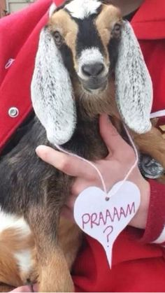 goat farm country prom proposal with Baby Goat