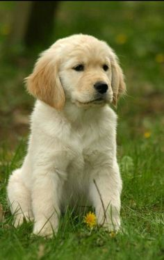 Adorable Puppy ♡