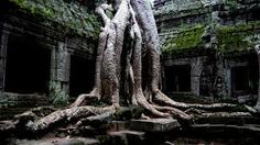 Ta Prohm is one of the most impressive ancient temples you will see found in Siem Reap, Cambodia Siem Reap, Imagenes Hd 1080p, Places Around The World, Around The Worlds, Et Wallpaper, Nature Wallpaper, Mobile Wallpaper, Wallpaper Gallery, Temple Ruins