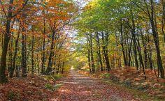 Bercé Forest, França