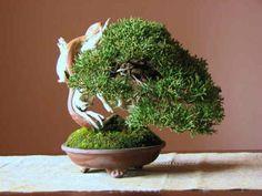 真柏 - 盆栽・ミニ盆栽・苔玉の通販サイト|みくに園