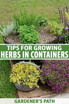 If you enjoy fresh flavors, a container herb garden is a fun and rewarding way to grow your own. Low maintenance and fast growing, these pretty and fragrant plants look spectacular on decks, patios, and along pathways. Get all our easy growing tips right here on Gardener's Path. #containergarden #herbs #gardenerspath Container Herb Garden, Container Gardening Vegetables, Container Plants, Plant Containers, Growing Herbs, Growing Flowers, Fast Growing, Organic Gardening, Gardening Tips