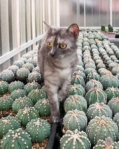 Wonderful Cactuses And Desert Plants Photography By Wachirapol Deeprom – Best Garden Plants And Planting Cat Plants, Garden Plants, Indoor Plants, Indoor Cactus, Adventure Photography, Wildlife Photography, Desert Photography, Cactus Photography, Cacti And Succulents
