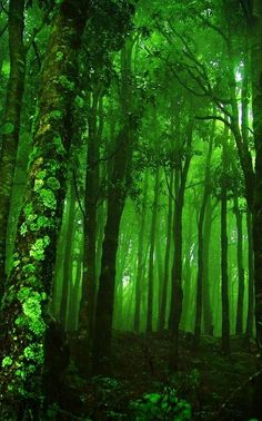 emerald green things | emerald green wood | Lost in a forest