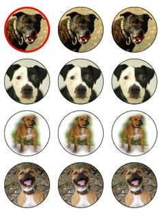 staffordshire terrier cup cake toppers edible rice paper choose 12 or 20 staffie