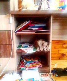 Нет у #крошкаПо больше полок. Кто-то решил что это её дом  #кот #котырубцовска #cat #cats #двакота