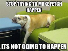 FETCH REALLY