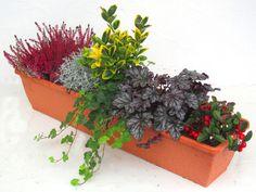 Bepflanzter Balkonkasten 80 cm wintergrün im Bewässerungskasten