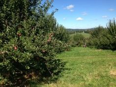 Orchards near NYC http://www.forbes.com/sites/johngiuffo/2013/09/30/going-apple-picking-for-two-of-new-yorks-best-orchards-nows-the-time/