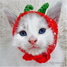 """This+listing+is+for+one+(1)+custom+crocheted+strawberry+hat+for+cats+or+small+pets+made+from+100%+acrylic+yarn.+Spot+clean+only.+Safety+First+-+please+do+not+leave+your+pet+pal+unattended+while+wearing+this+hat.    Measurements+(approximate):  Kitten+Hats+-+6""""+long,+3""""+wide,+1.75""""+between+ear+hol..."""