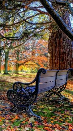 Imagine sitting on this lovely bench looking at the woods, peaceful and serene, after you just finished an infusing walk.