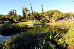 zielen na Maderze - Palheiro Gardens, Santa Catarina Park