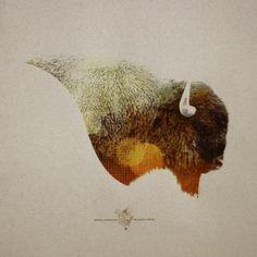 Designspiration — North America Wildlife » ISO50 Blog – The Blog of Scott Hansen (Tycho / ISO50)