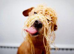 Pasta puppy