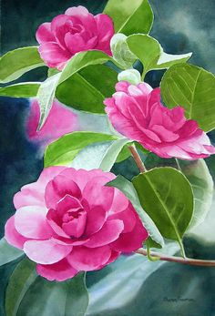 Pink Camellia Print featuring the painting Bright Rose-colored Camellias by…