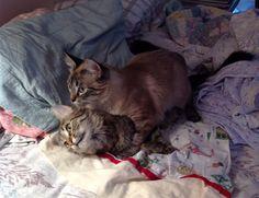 Mimi and Sammy playing around