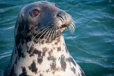 The natives are friendly at Kilmore Quay by Ken Hayes