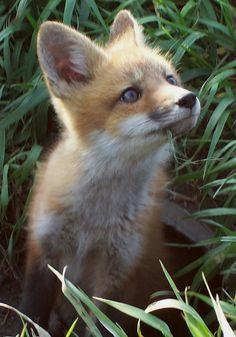 Aaaww... <3 Fox by theLtrain
