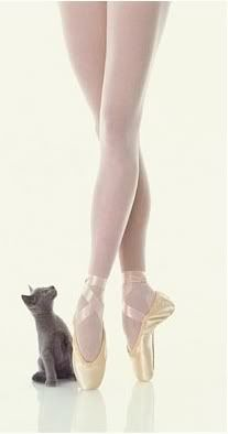 somedays, during dance class, i feel exactly like the lil kitty
