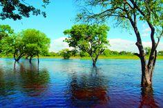 Llano Venezolano