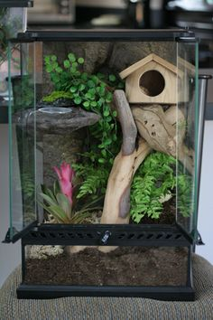 Home Aquarium Ideas: The Aquarium Buyers Guide Crested geckos home - like the idea of using a birdhouse as a hiding place. Remember to research the best type of substrate to use.