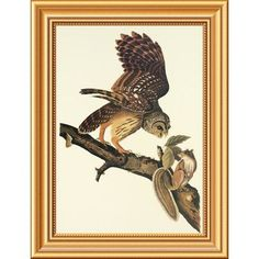 Global Gallery 'Barred Owl' by John James Audubon Framed Wall Art Size: