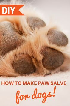 The cold weather can wreak havoc on our dogs' paws causing cracks, bleeding, and, if left untreated, an infection. We have a simple routine to keep all the paws in our home properly cared for during the cold winter and hot summer months.