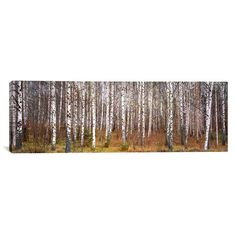 Found it at Wayfair - Panoramic Birch Trees in a Forest Photographic Print on Wrapped Canvas
