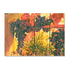 Old Vines 22.5x16 Indoor/ Outdoor Full Color Wall Art