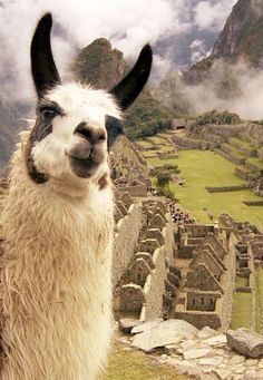1000+ images about Peru on Pinterest | Machu picchu, Lima ...