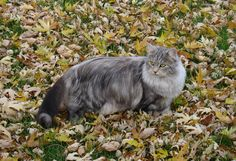 Mishka in the Fall