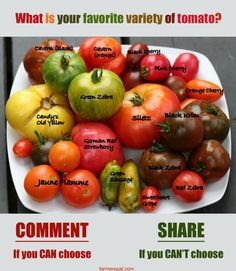 Growing tomato plants from seeds is not that difficult and it is extremely rewarding. Phenomenal Growing Tomatoes from Seeds Ideas. Roasted Heirloom Tomatoes, Heirloom Tomato Seeds, Roasted Tomatoes, Heirloom Tomato Recipes, Growing Tomatoes From Seed, Types Of Tomatoes, Tomato Types, Grow Tomatoes, Hummus
