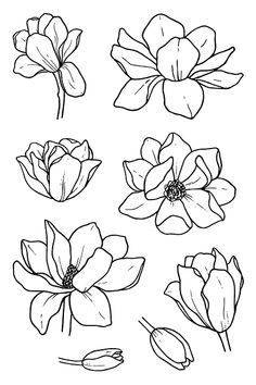 black and white line illustration of magnolia flow… – - Blumen ideen Flower Art Drawing, Flower Line Drawings, Flower Drawing Tutorials, Butterfly Drawing, Flower Sketches, Floral Drawing, Art Sketches, Painting & Drawing, Art Drawings