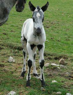 Rare horse markings