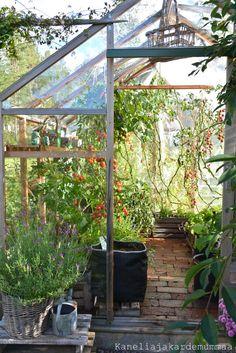 Considering a garden shed? Backyard Greenhouse, Greenhouse Plans, Indoor Garden, Outdoor Gardens, Underground Greenhouse, Garden Organization, Greenhouse Interiors, Landscape Concept, Garden Cottage
