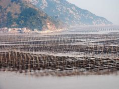 Go fishing in the Xiapu Mudflat, located along the southeast China coastline in Fujiang Province.