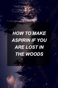 How to Make Aspirin If You Are Lost in the Woods   Survival Shelf   Survivalist & Prepper Links