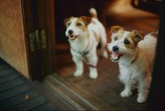 welcome! | minato on Flickr - Fotosharing!