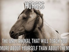 This is my favorite part of a horse's loyalty to a person. What's yours?