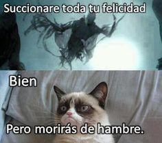 Megapost imagenes y memes de Gatos y otros animales 1 de 2:) - Taringa!