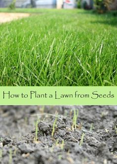 HOW TO PLANT A LAWN FROM SEEDS - Starting a lawn from scratch using seed is the least expensive way to transform your home or garden. Here's how to plant a lawn from seeds.
