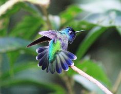 Beautiful image of the biodiversity of Costa Rica in Central America