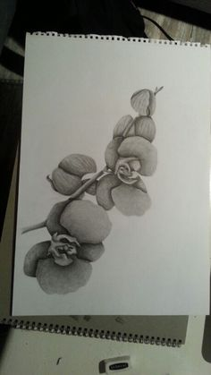Orchid. Drawing by Lize Dijker. Instagram: lieeess_  lizemartine.weebly.com