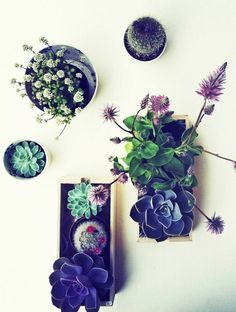 Green Thumb Chic: How to Keep Your Garden Going Indoors