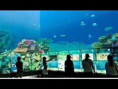 """""""THE CUBE"""" - $3.5M Interactive Video Wall & AV Experience at Queensland ..."""