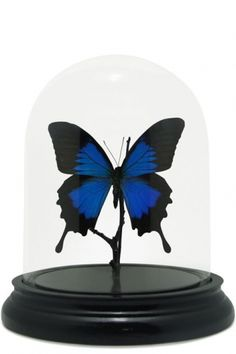Butterfly Domes