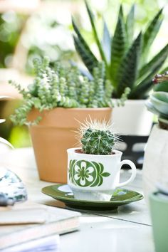 nice 55 Impressive Mini Garden Mug Ideas To Add Beauty On Your Home Cacti And Succulents, Planting Succulents, Glass Planter, Planters, Outdoor Plants, Outdoor Gardens, Vertical Planting, Little Gardens, Plants Are Friends